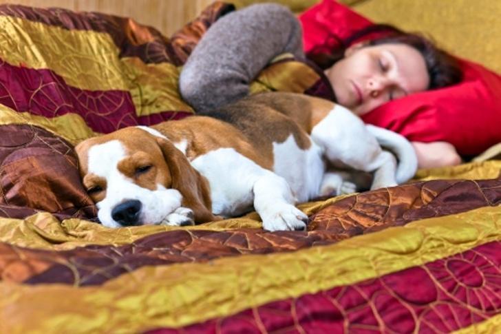 Dormir perros