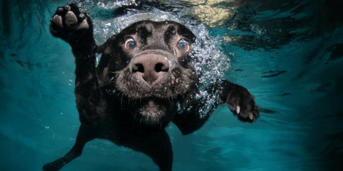 Perros nadar