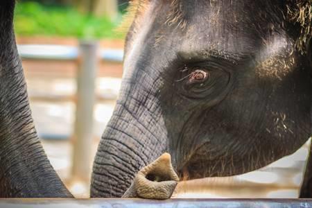 elefante animal