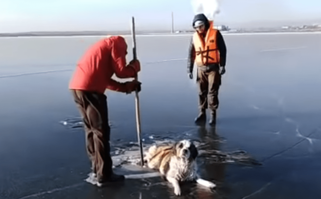 Perro atrapado en el hielo