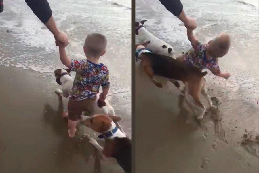 video viral twitter muestra a bebé golpeado por perros en la playa