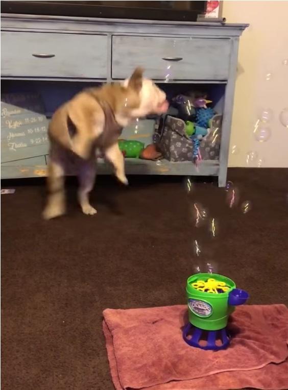 Perro y burbujas