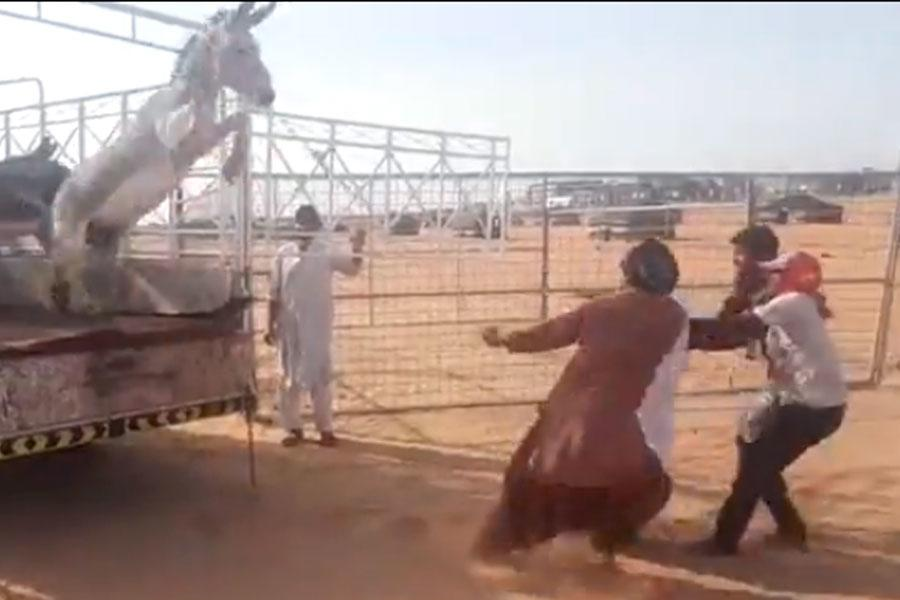 video muestra a asno saltando sobre hombres