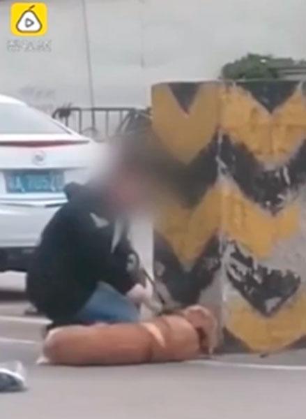 Maltrato animal: perro es brutalmente golpeado por su dueño