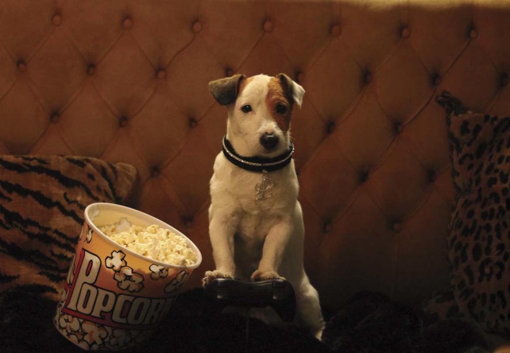 Mascotas perros