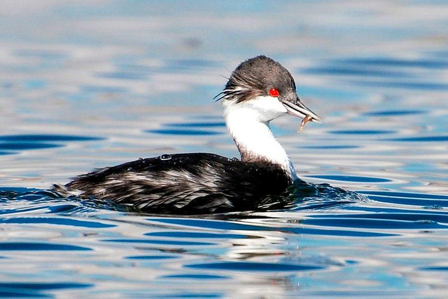 Serfor: Aves en peligro de extincion