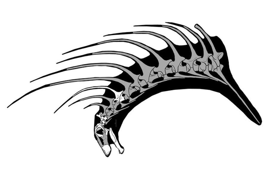 nuevo dinosaurio encontrado en Argentina