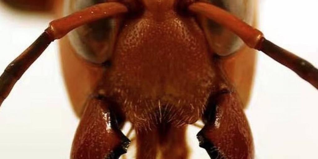 animal viral